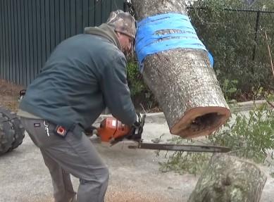 チェーンソーで木を切ったら何かが飛び出した!
