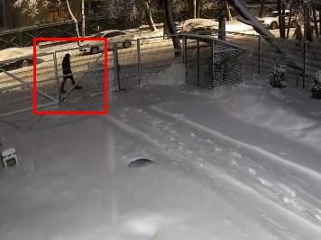 雪の重みに耐えられなった木が倒れ、歩行者に直撃